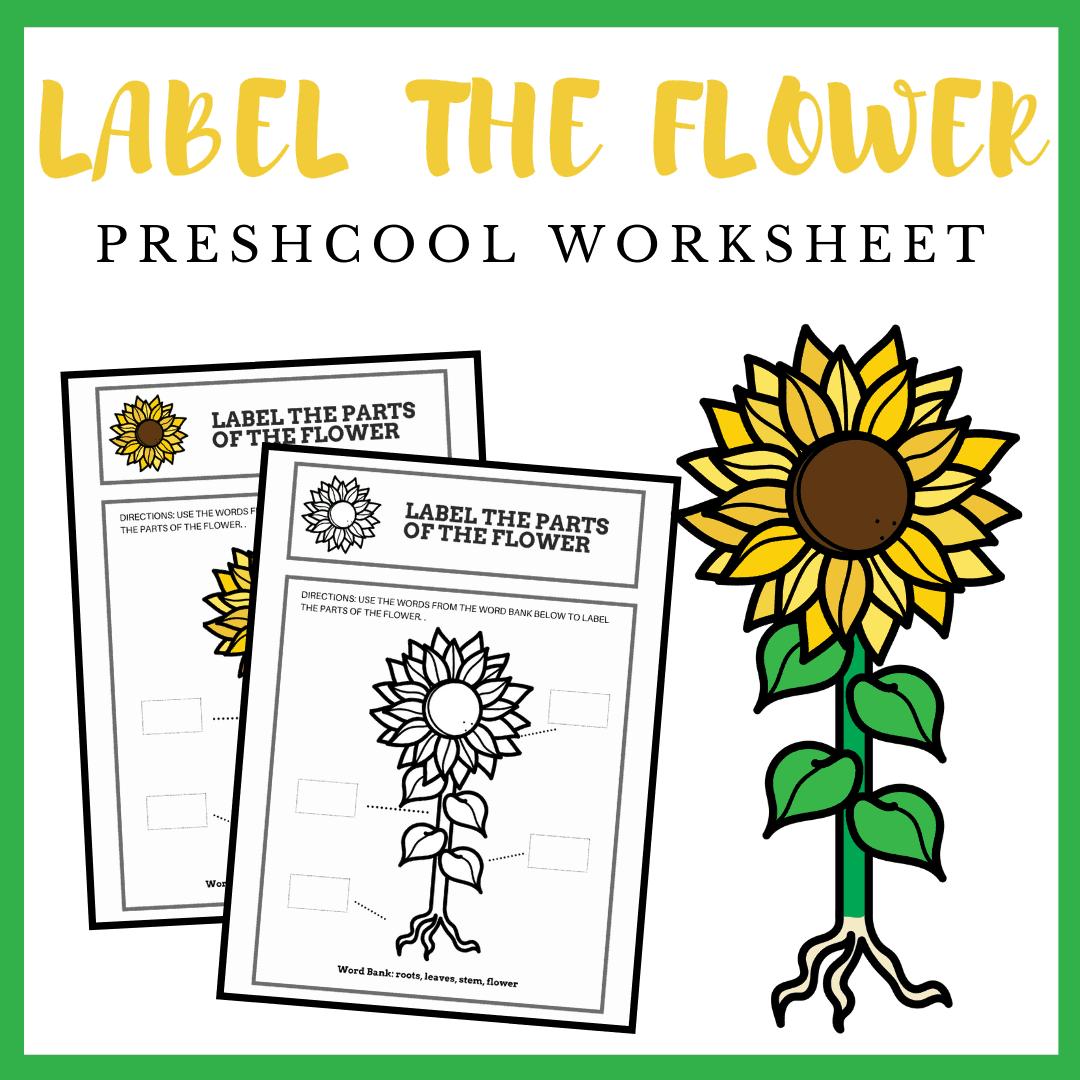 Kids will love sharing their knowledge as they label this parts of a flower preschool worksheet! It's perfect for assessment at the end of your lesson.