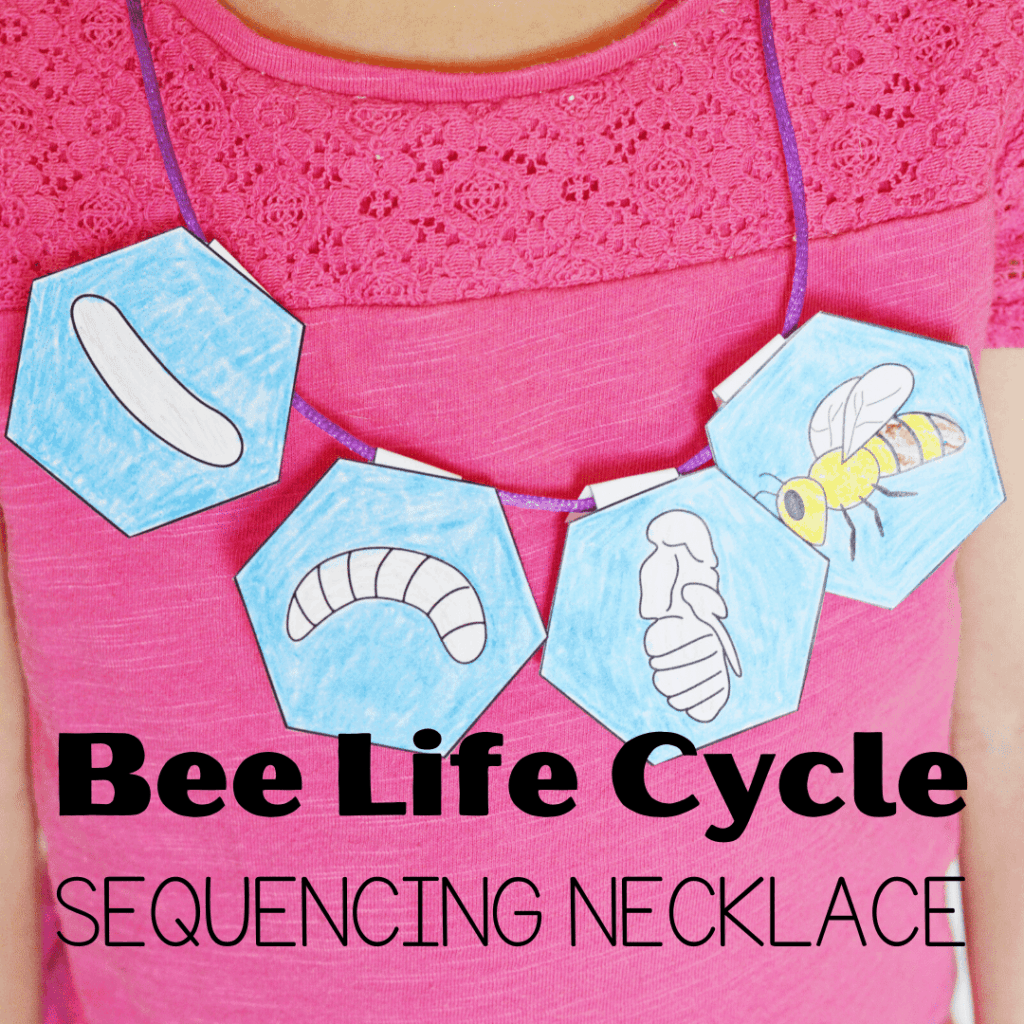 After teaching your preschoolers about bees, let them put together this bee life cycle sequencing necklace that will help them retell how a bee grows.