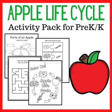Fall is the perfect time of year to study apples! This apple life cycle printable features 17 activities designed to teach the five stages of an apple's life and the vocabulary that goes with it.