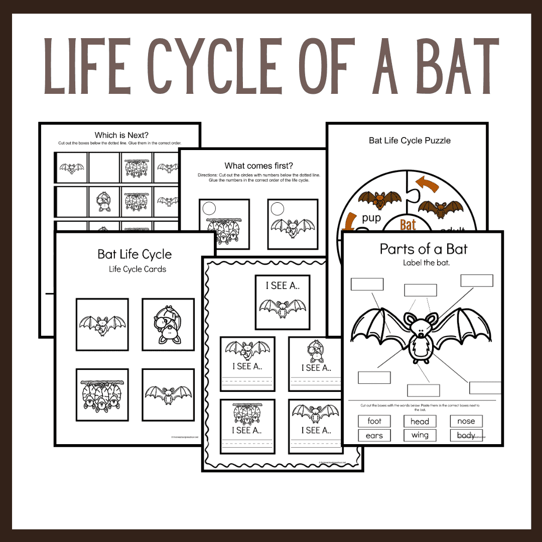 Bat Life Cycle Worksheets for Preschoolers