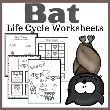 Fall is the perfect time of year to study bats! These bat life cycle worksheets feature 15 activities for preschool and kindergarten kiddos!