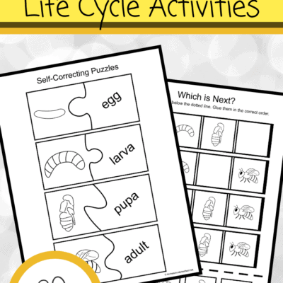 Life Cycle of a Bee for Preschoolers