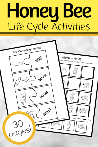 This printable life cycle of a bee for preschoolers pack features fifteen engaging activities that are perfect for preschoolers, pre-k, and kindergarteners.