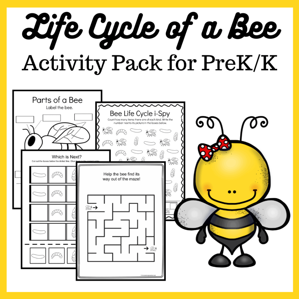 Spring and summer are the perfect time of year to study bees! This bee life cycle printable features 15 activities for preschool and kindergarten kiddos!