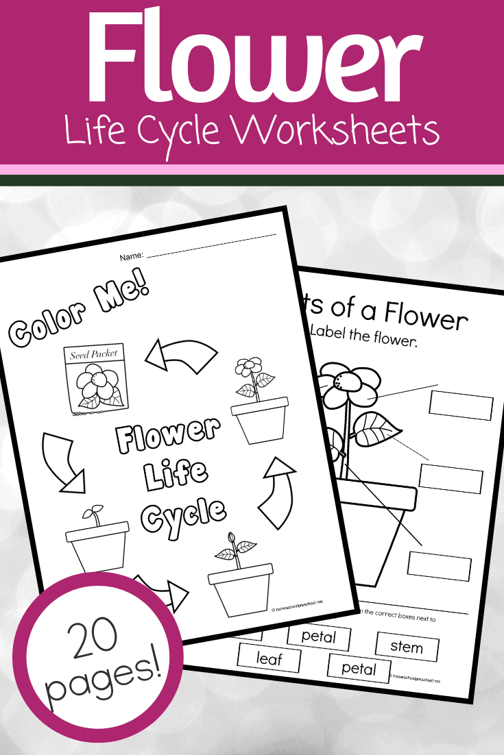Spring and summer are the best time of year to study flowers. This printable features activities that focus on life cycle of a flower for kids. 16 exciting activities!