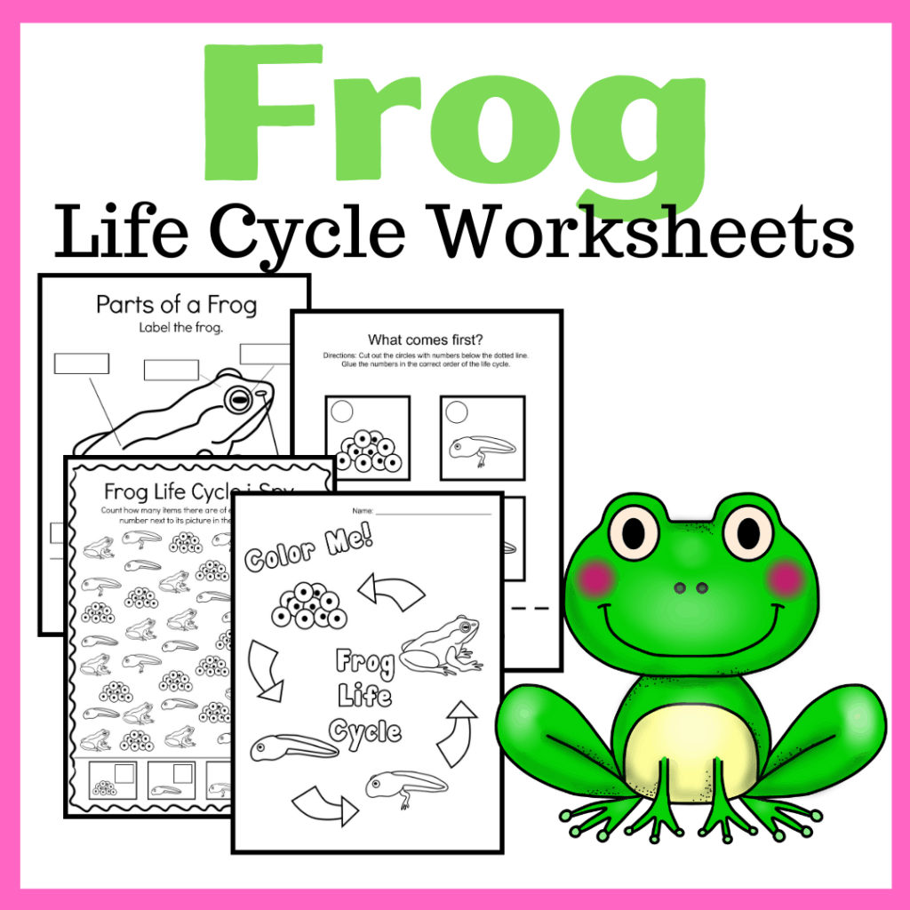 Spring and summer are the best time of year to study frogs. This printable features ten frog life cycle preschool activities!