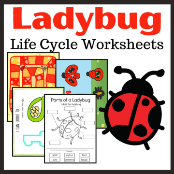 Spring and summer are the best time of year to study ladybugs. This printable features twelve ladybug life cycle activities!