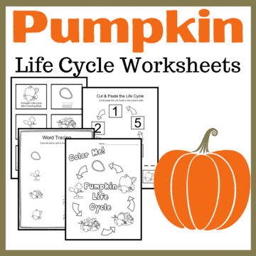 Autumn is the best time of year to study pumpkins. This life cycle bundle features 24 hands-on pumpkin life cycle activities!