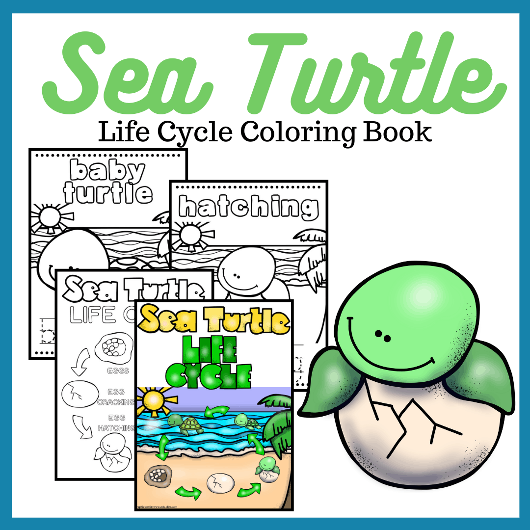 When you give this sea turtle life cycle printable to your preschoolers, they can color the pages and trace the labels before playing the matching game.