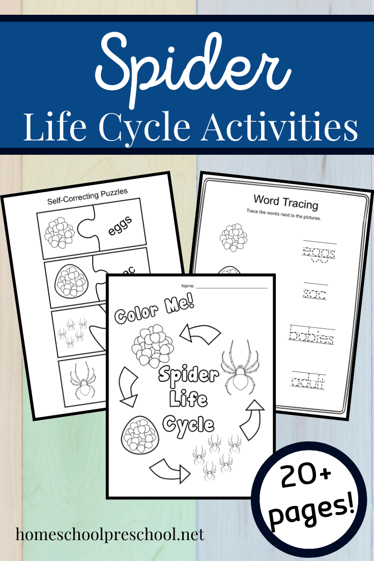 Fall is the best time of year to study spiders. This spider life cycle for kids bundle features 19 hands-onactivities for preschoolers!