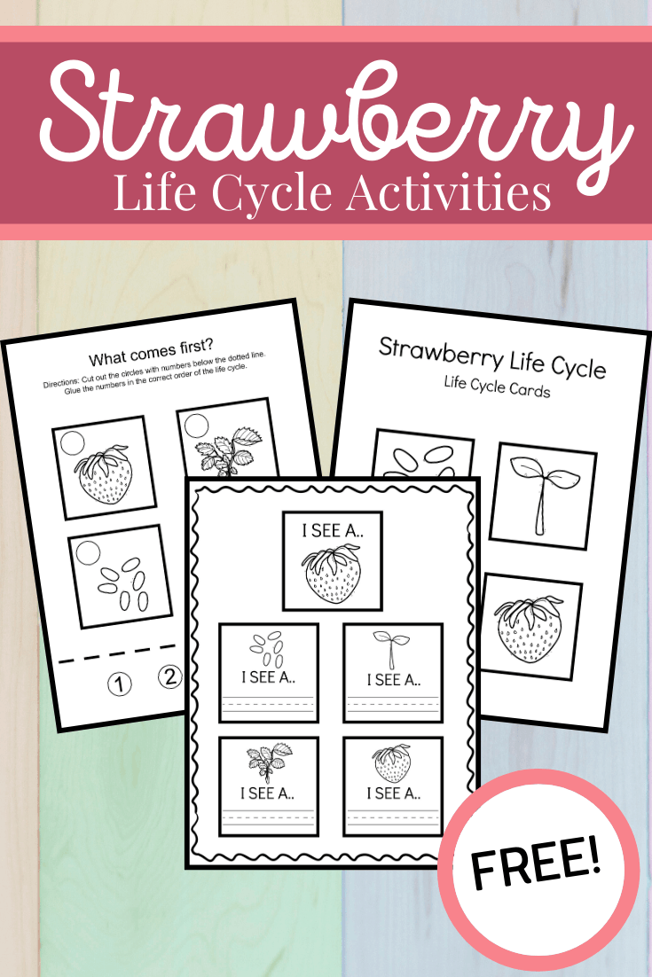 Use these strawberry life cycle worksheets to teach kids how the strawberry plant grows. This set includes three activities that highlight all four stages.