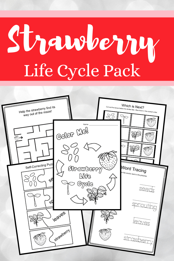 Summer is the best time of year to study strawberries. This strawberry life cycle bundle features 21 hands-on activities!