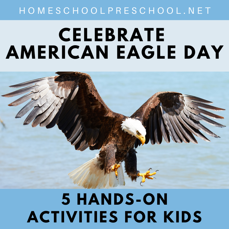 National American Eagle Day is coming up quickly on June 20th! It's a day to honor our national symbol and learn about this magnificent bird.