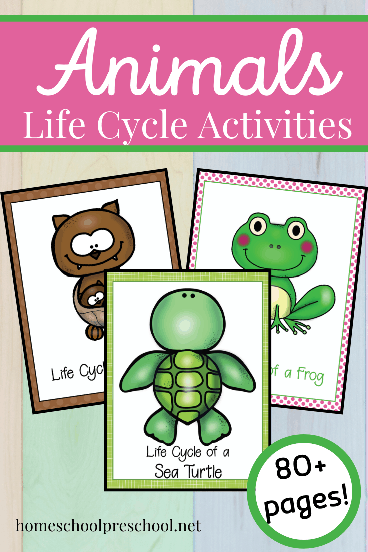 No matter what time of year it is, you can use this Life Cycle of Animals bundle to teach your preschoolers about bats, frogs, and sea turtles!