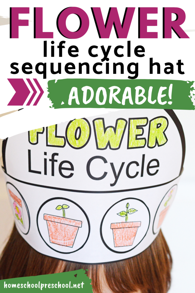 Looking for a fun interactive teaching idea for the life cycle of a flower? This sequencing hat is a fun activity for preschoolers and kindergarteners.