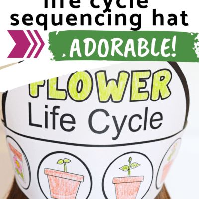 Life Cycle of a Flower Hat