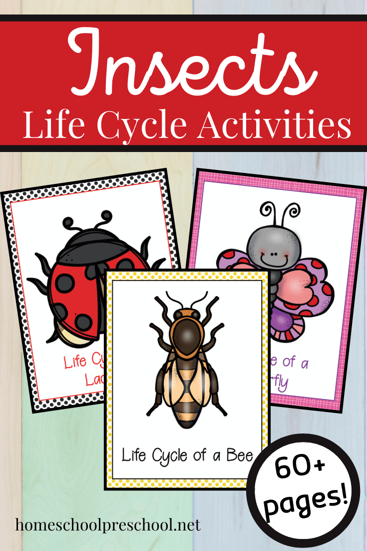 This spring and summer, use this Life Cycle of Insects for Preschool bundle to teach your preschoolers about bees, butterflies, and ladybugs!