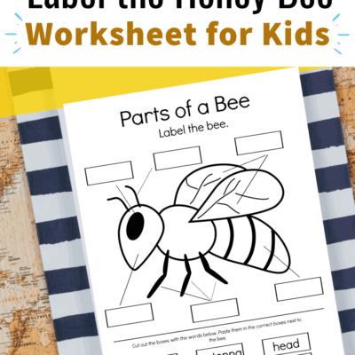 Parts of a Bee Preschool Worksheet