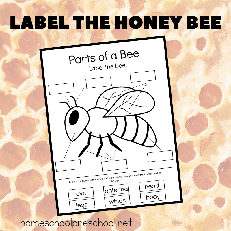 This parts of a bee preschool worksheet is perfect for your life cycle, insect, and general bee-themed preschool activities this spring and summer.