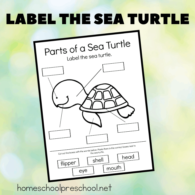 Download and print this worksheet and have your kids label the sea turtle! It's perfect for your ocean or summer themed lesson plans.