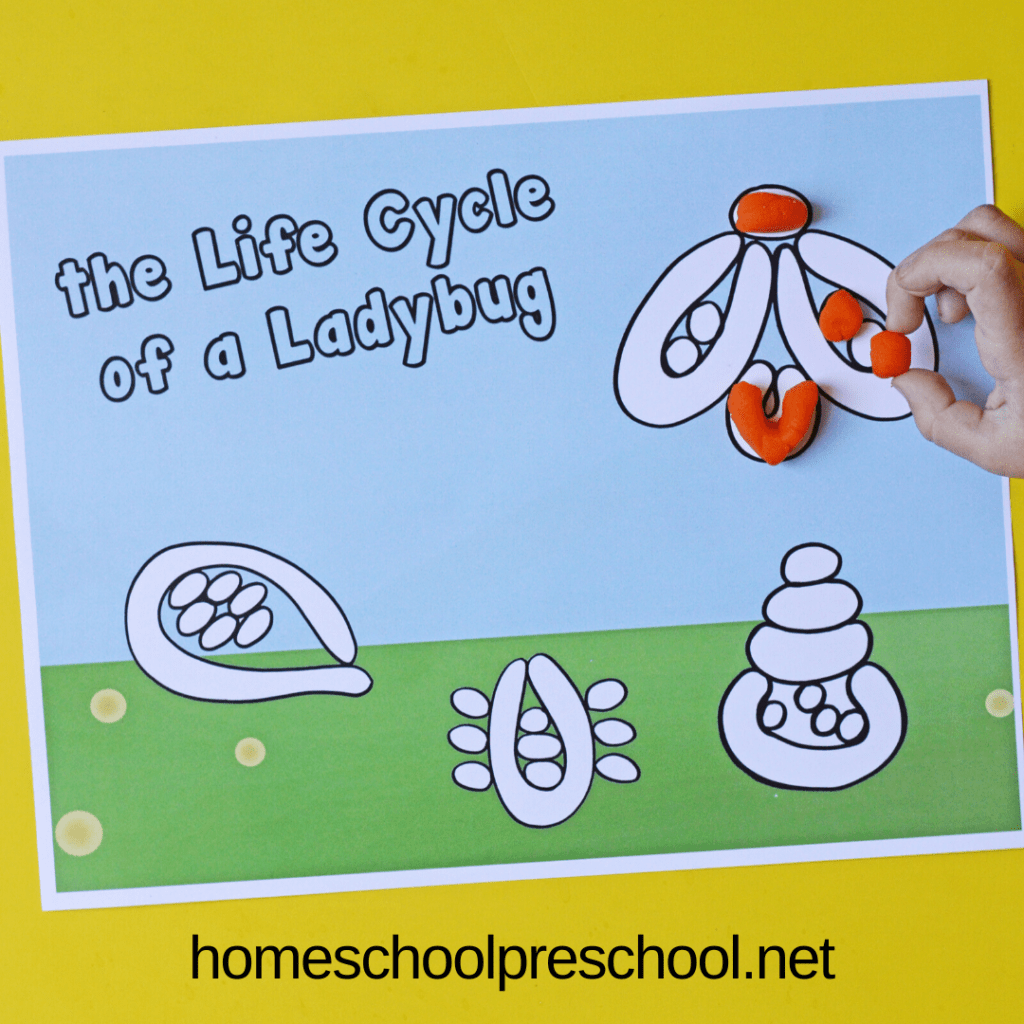 These ladybug playdough mats will help preschoolers visualize the stages of the life cycle of a ladybug. They are both educational and fun!