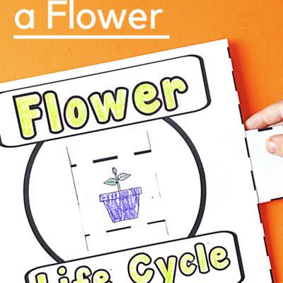 Flower Life Cycle Slider