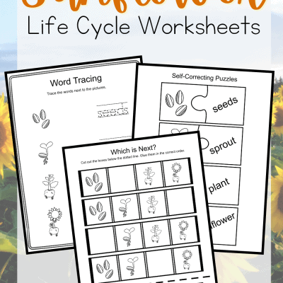 Preschool Life Cycle of a Sunflower