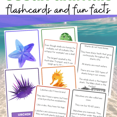 Ocean Animals Facts for Kids