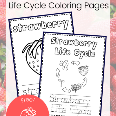 Life Cycle of a Strawberry